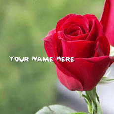 Red Rose With Name